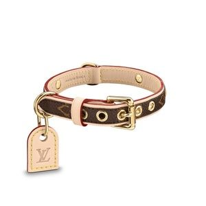 Baxter Pm Dog collar